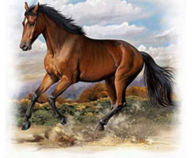 "American Quarter Horse Cross Stitch Pattern LOOK YOUR FINISHED PATTERN SIZE. 288 Stitches x 236 Stitches 16.0"" X 13.2"" ON (18 COUNT) AIDA CLOTH. ~~ I SEND WORLD-WIDE ~~Free"