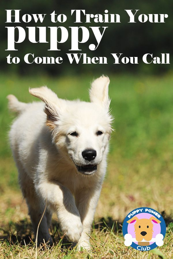 How To Train Your Puppy To Come When You Call Training Your Dog