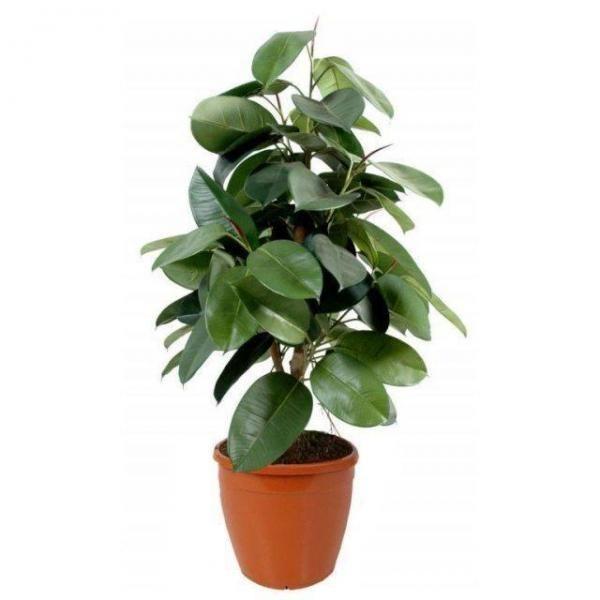 As melhores plantas purificadoras de interiores. Ainda que você não acredite, o ar exterior é bem mais limpo que o ar interior de casa, do escritório ou de qualquer outro ambiente fechado, uma vez que as árvores e as plantas estão constantemente lim...