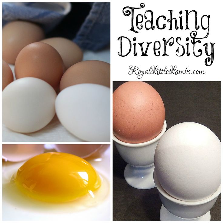 Teaching Diversity - It doesn't matter what color your shell or skin is. | http://royallittlelambs.com/