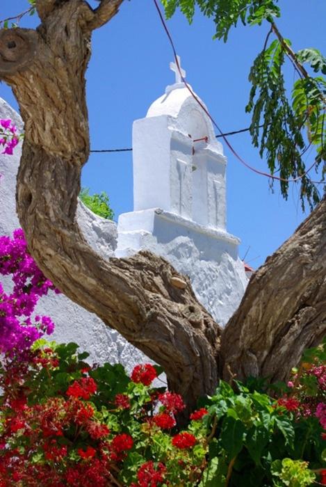 ☼ Αμοργος - Amorgos ☼    Το δεντρο και η θεα του….   The tree and its view….    photo source: greecephotos.gr