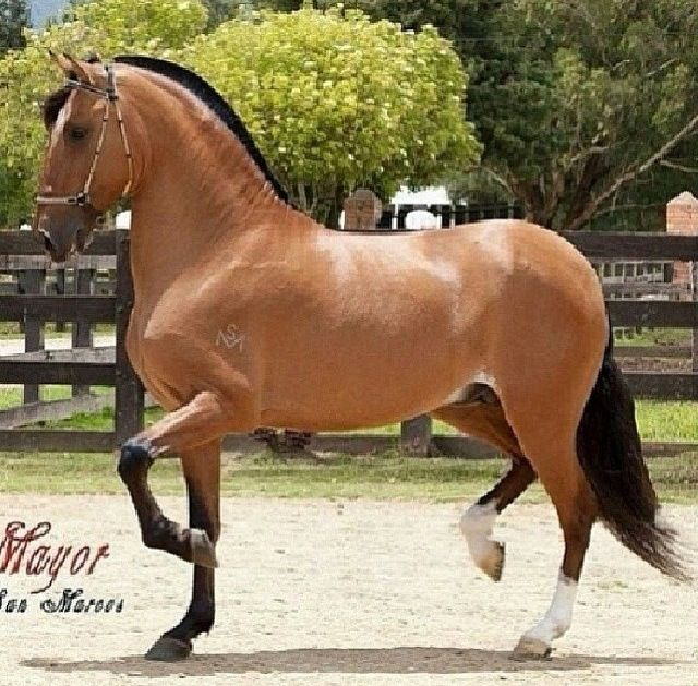 Hores good | Hores | Horses, Majestic horse, Horse pictures