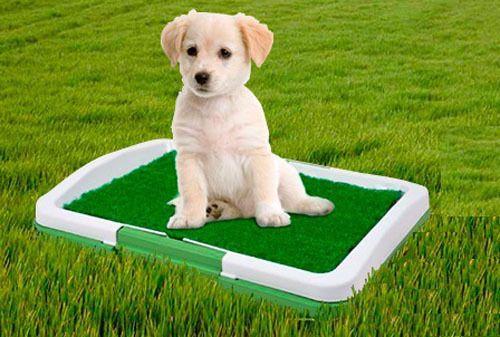 Animal Domestique Toutou Toilette Entraîneur Absorbant Pelouse Tapis Potty