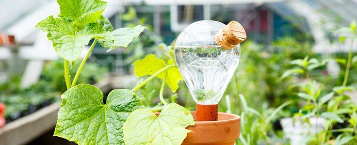 In een warme zomer moet je je plantjes binnen en buiten goed nathouden willen ze overleven. Buiten regent het nog wel eens, maar binnen zul je toch met de
