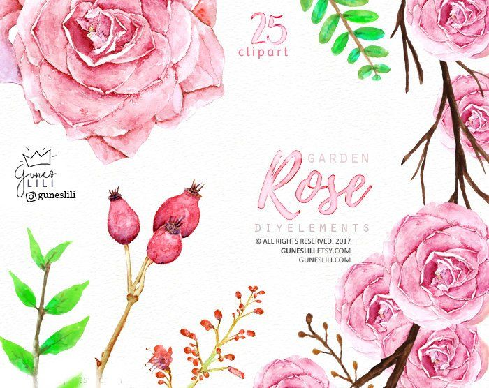 Pink Watercolor Roses Clipart Floral Wedding Graphics Boho