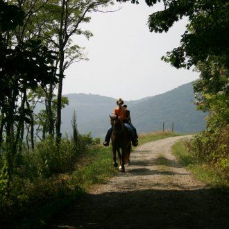 Through annual contributions from the Blowing Rock Charity Horse Show, the Blue Ridge Parkway Foundation provides funds for the maintenance of the popular carriage trails at the Moses H. Cone Memorial Park.  These trails are not only popular for horseback riding, but are also used heavily by walkers and runners.