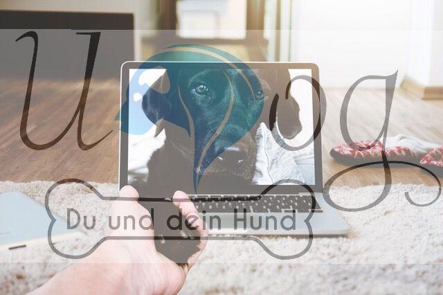 😍🐶 wir sind wieder Online 🎉🎉🎉 www.u-Dog.de Schaut vorbei und wählt: ✅ das perfekte Training ✅die optimale Entspannung ✅ coole Accessoires für dich und Hund 😍 #udog #halsband #leine #udogspa #udogshop #Rabatt #rabattcode #barf #bleib #sitz #platz #welpe #welpen #instadogs #Hundeliebe #hundetraining