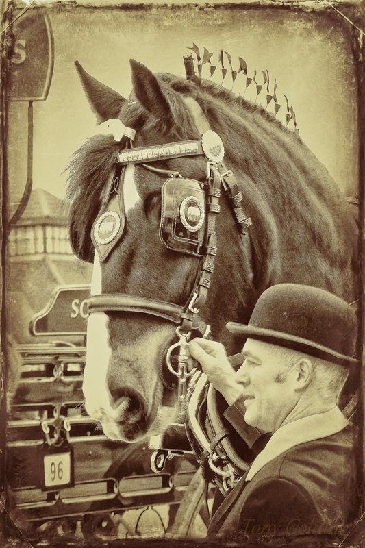 Shire Horse Society Spring Shire Show in Peterborough, England  Photo by Tony Golding