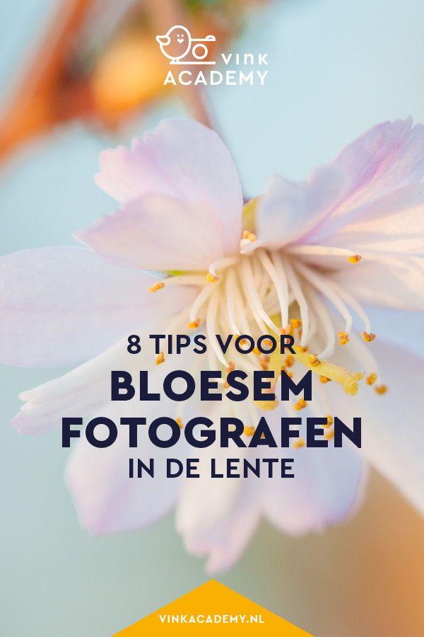 Blüte fotografieren: 8 Tipps