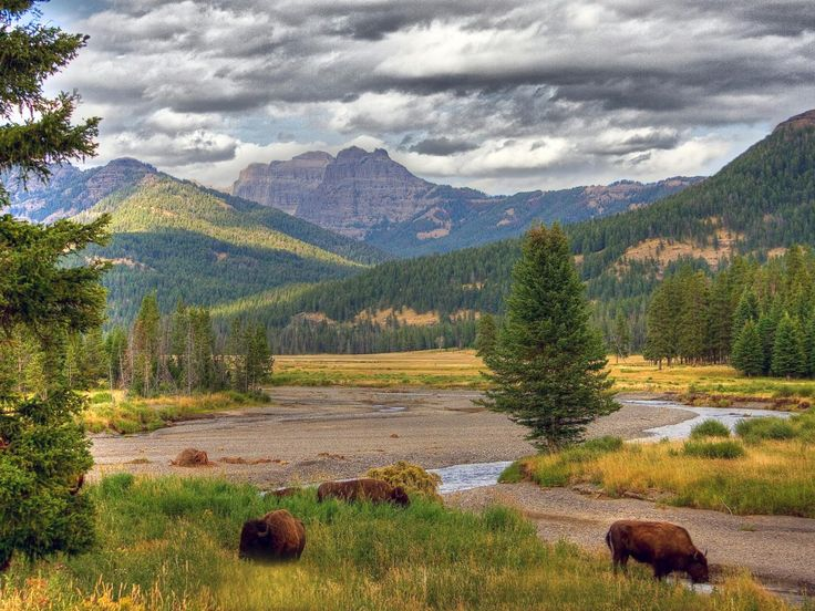 Formed by volcanoes and full of flowers, fauna and vistas galore, Yellowstone is possibly the grandest national park.