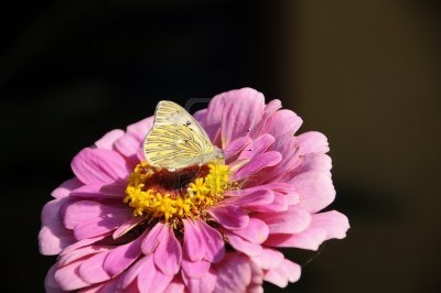Butterfly On Flower, First Days Of Autumn Royalty Free Stock Photo, Pictures, Images And Stock Photography. Image 13214481.