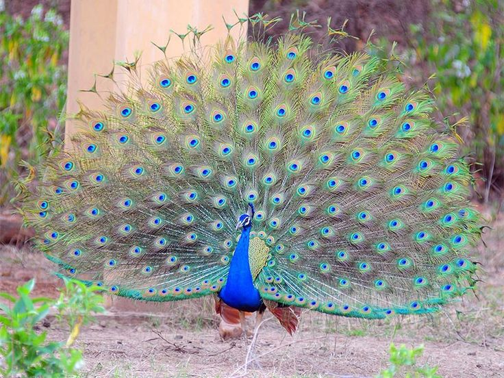 Ken Gharial Sanctuary - in Madhya Pradesh, India