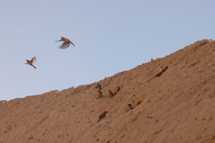 Birds in Tepe Sialkh