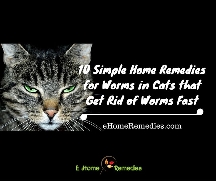 You can ease your cat's symptoms and stop the worm infestation all together with the help of home remedies for worms in cats.