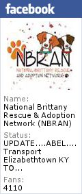 NBRAN - National Brittany Rescue and Adoption Network