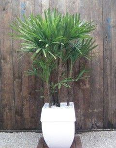 Oi amigos, como prometido o post de hoje é para sugerir plantas que vão bem em vasos e em ambientes com pouca luz e sem incidência de sol. ...