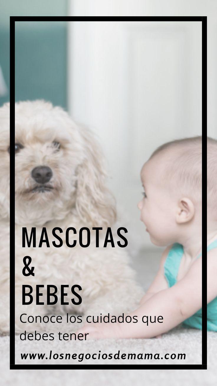 3d1acd3b8 Cuando tenemos mascotas y bebes en casa juntos debemos tener ciertos  cuidados para evitar accidentes