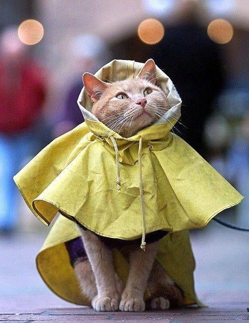 A noi non piace la pioggia! Gatto con l'impermeabile