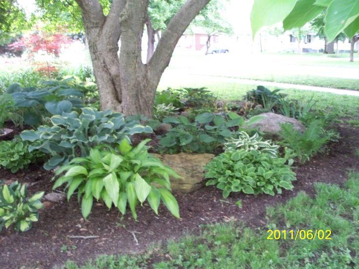 Shade garden under magnolia tree yard pinterest for Garden design under gum trees