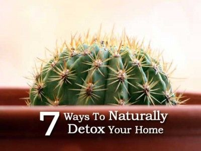 7 Ways To Naturally Detox Your Home