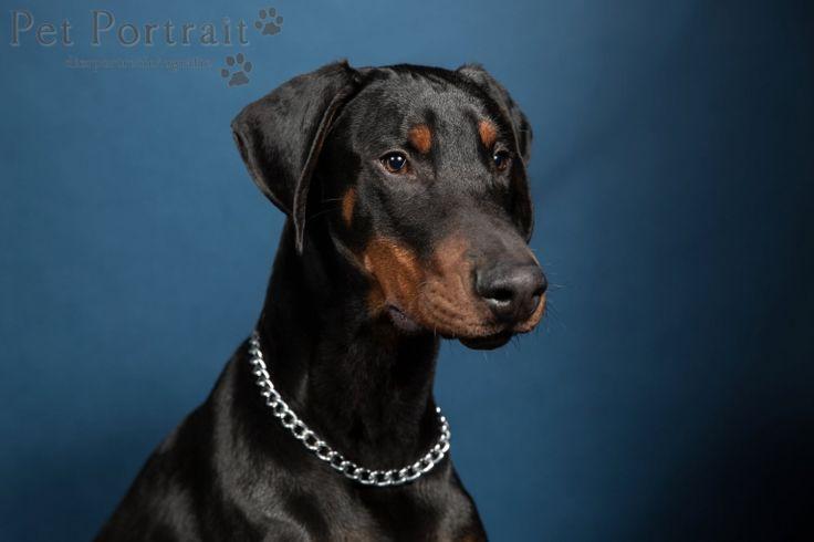 Hondenfotograaf Amsterdam - PetPlan Winner actie - Honden op de Winnershow-23