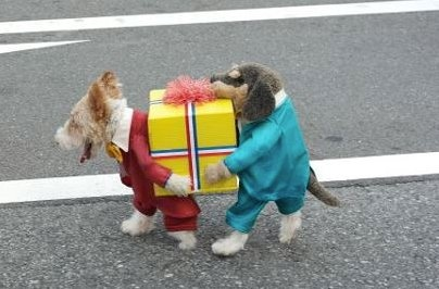 Best dog costume ever.: Dogs, Halloween Costumes, Pet, Dog Costumes, Halloweencostume, Animal
