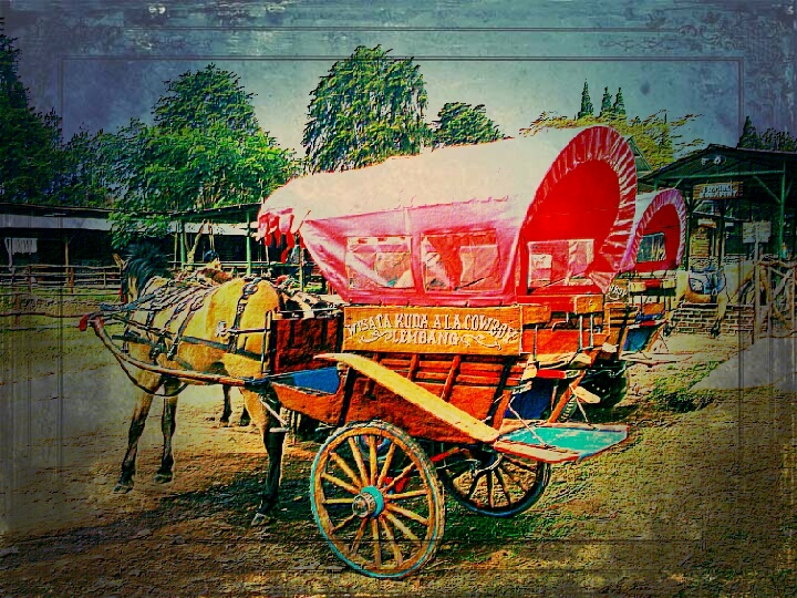 Delman or Dokar!  a traditional horse carriage from Java Province