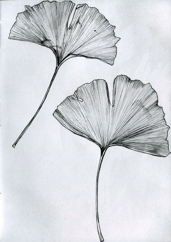 ginkgo biloba tattoo - Google Search