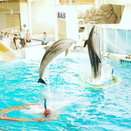 this show Action Funny Dolphins at Seaworld Orlando by travel spot