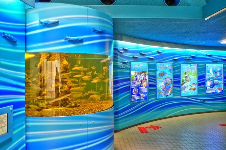 今日は、エントランスがリニューアルした、さいたま水族館へ行ってきた。  川魚中心の展示なので、控えめな印象…