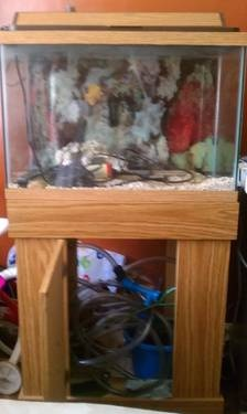 30 Gallon Fish Tank with Stand with all accessories needed to start - $200 (Brooklyn)  -30 gallon fish tank with stand.  -Stand has a storage space.  -filtration system  -decorative rocks  -light  -heater  -hose  Read more: http://newyork.ebayclassifieds.com/accessories/brooklyn/30-gallon-fish-tank-with-stand-with-all-accessories-needed-to-start/?ad=16023084#ixzz1r35xa9bo