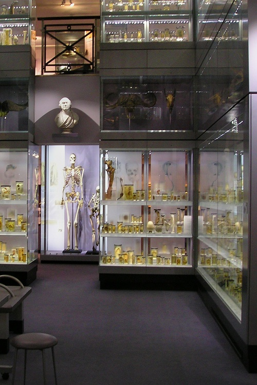 The Hunterian Museum - Free. Hidden London - great way to spend some 'free time' on one of our London trips