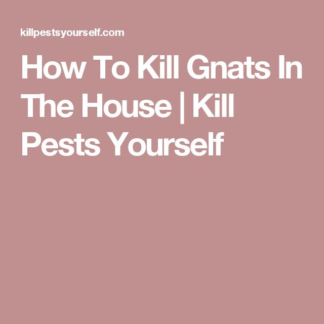 How To Kill Gnats In The House | Kill Pests Yourself