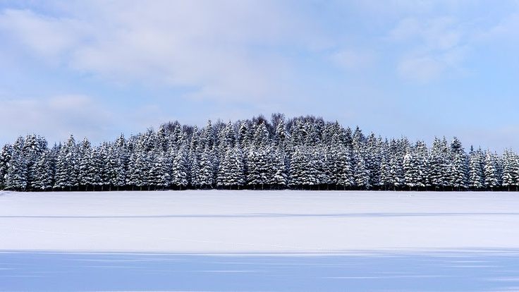 Northern Land / 北の大地
