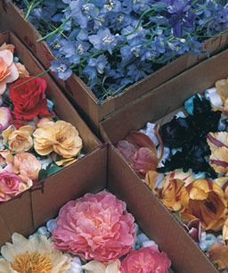 Secar flores con arena 6