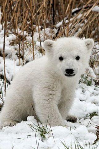 It's a baby polar bear!!!!!!!!!!!!