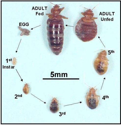 23 best Bed bugs control images on Pinterest Bed bugs Pest