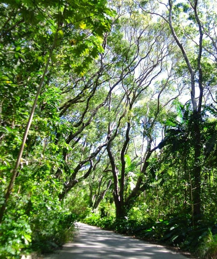 Just beyond this magnificent grove emerges one of the most beautiful look-out spots in Barbados!