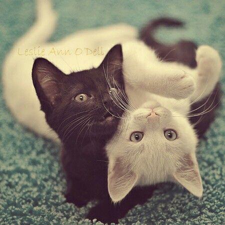 Kitty yang в hd