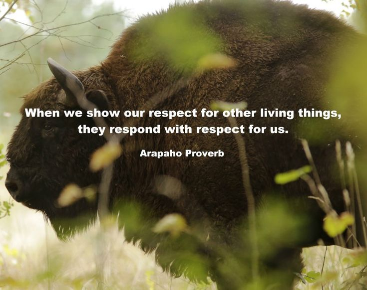 Native American Proverbs – The Observer