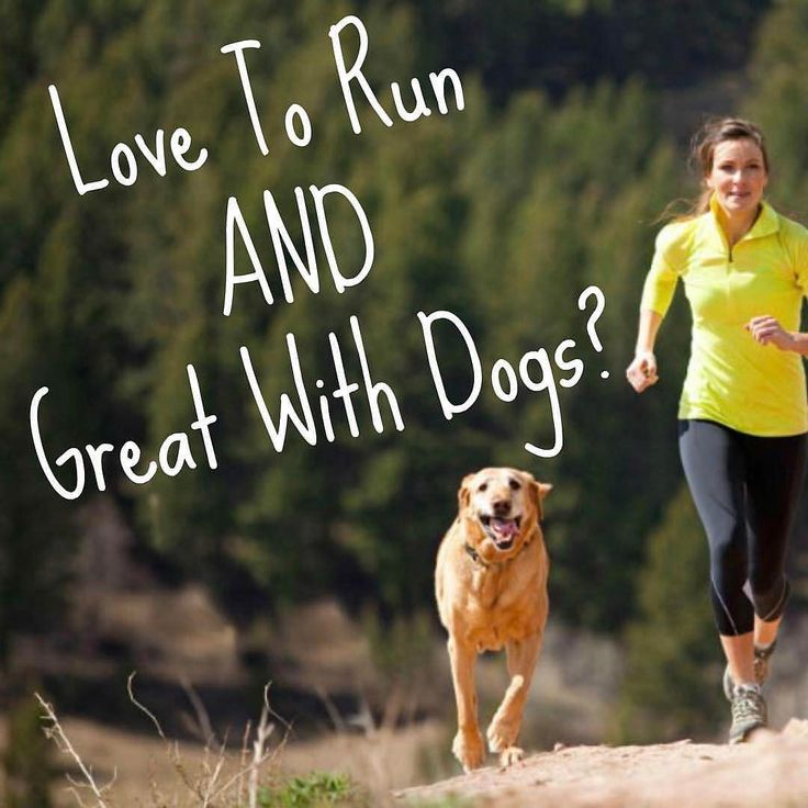 @dogrunnin IS HIRING  WE'RE HIRING We're looking for a part time runner to join our team in Halifax.  Please keep in mind that this job is very physical you may run or walk up to 6 hours a day and be outside for prolonged amounts of time in all weather conditions. Position is part time with possibility to move to full time. Work hours generally between 10-3.  Here's what you'd be doing: - Pick up and drop off dogs from their homes - Ensure security of their homes when picking up and dropping…