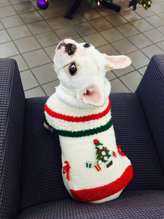 French Bulldog❤️ in a knit Christmas dog sweater in cream & Green and by CUTIEDOG