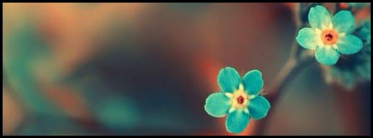 nature, facebook timeline cover photo, blue flowers
