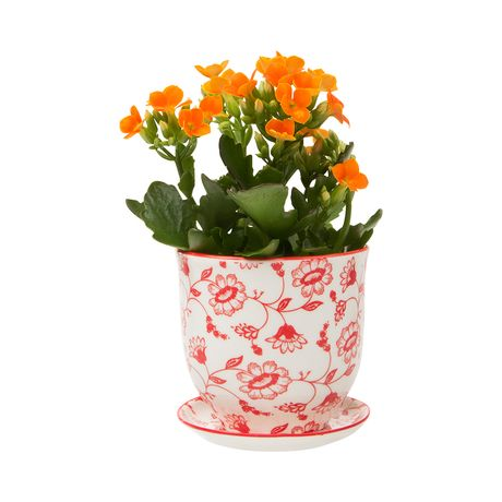 Modeled after classic teacups, this Brighton Pot and Saucer Planter will make a charming addition to your country-style or transitional home. This traditionally inspired design is decorated with delica...  Find the Brighton Pot and Saucer Planter, as seen in the A Bohemian Artist's Retreat Collection at http://dotandbo.com/collections/a-bohemian-artists-retreat?utm_source=pinterest&utm_medium=organic&db_sku=120211