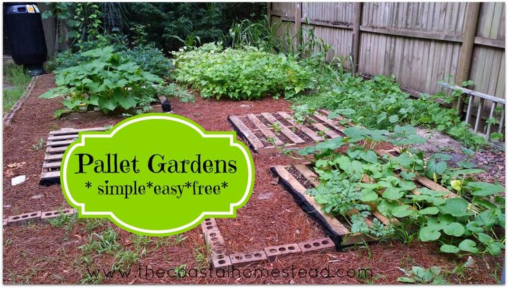 31 best gardening and growing plants images on pinterest for What to grow in a pallet garden