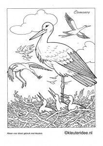 Kleurplaat ooievaar met nest, thema lente, kleuteridee.nl, stork preschool coloring, spring theme, free printable