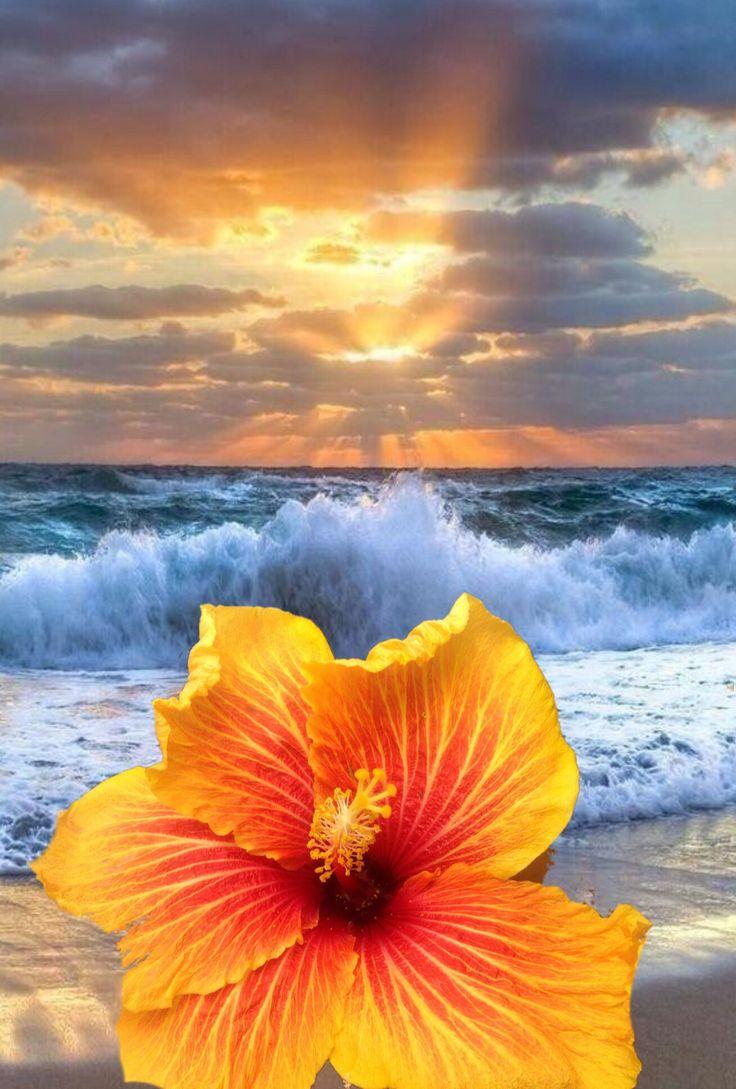 Hibiscus on the beach