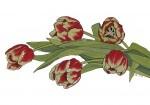 Tulips - gouache, pen and ink
