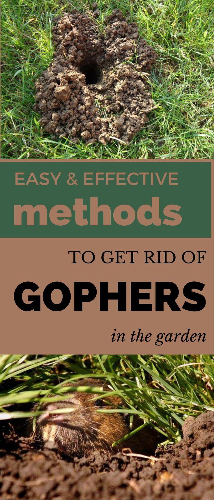 430 best Gardening images on Pinterest   Backyard ideas, Garden ...
