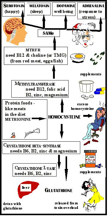 terrible quality graphic, but very informative article on homocysteine.
